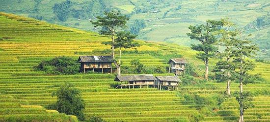 de rijstvelden